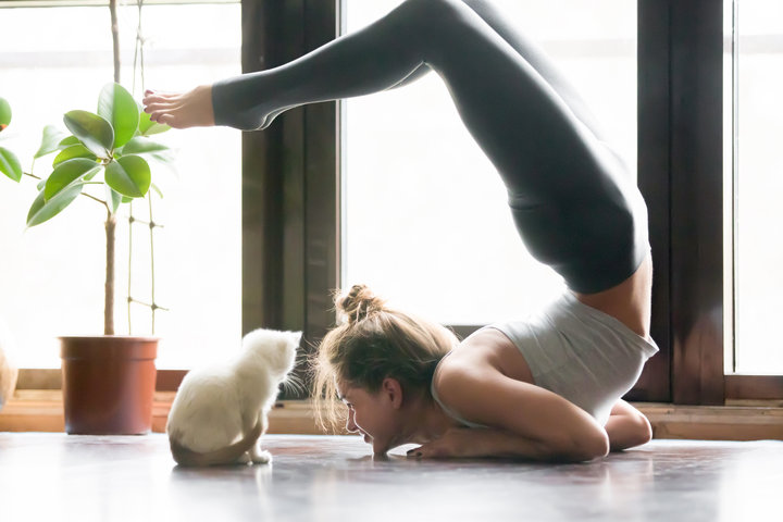 cats and yoga