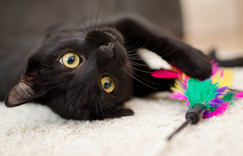 Mental Stimulation for Your Feline Friend