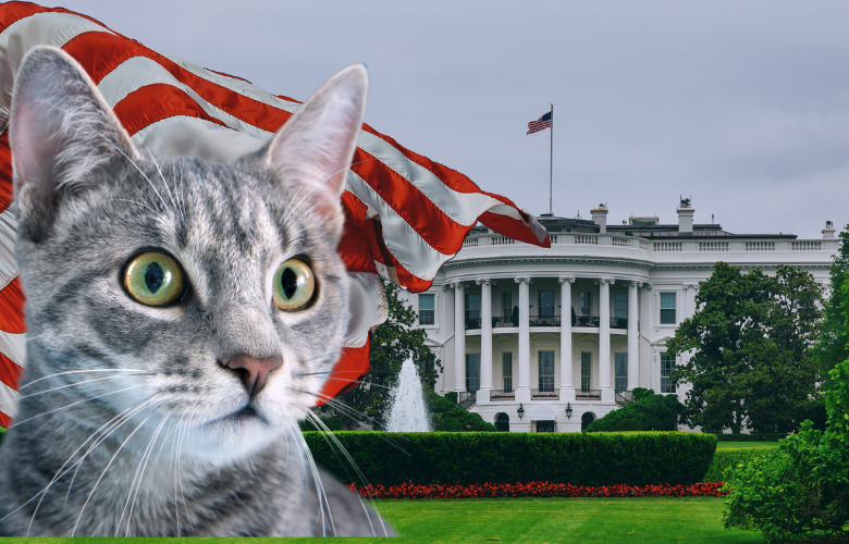 A First Feline in the White House