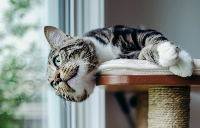 Add Vertical Space for Your Cat to Your Home