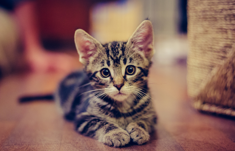 New Kitty Coming Home with You? (Supplies You Will Need)