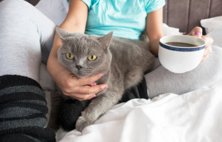 What are Cat Café's, Lounges, and Cat Bookstores?