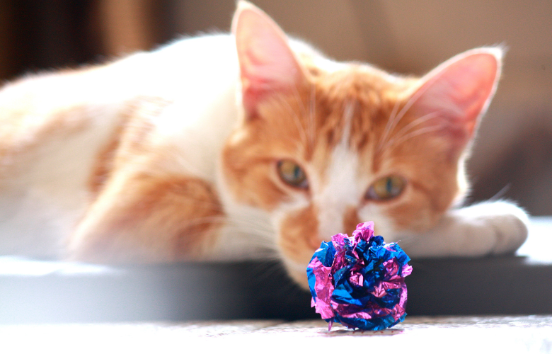 DIY Cat Toys – Easy Toys for Your Kitty