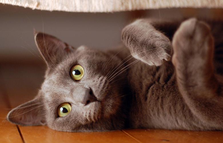Weird Cat Behaviors 101