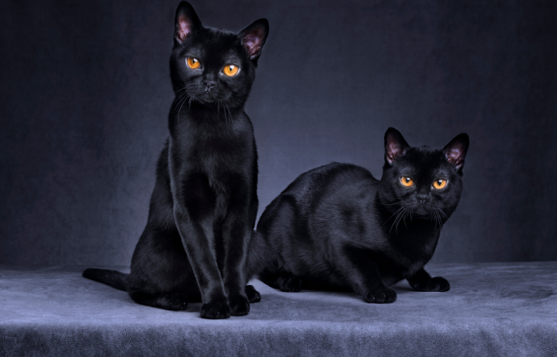 Protect Black Cats
